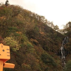 白老町 気軽に見られる白老の白滝