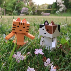 札幌市 百合が原公園の広場、ライラックコレクションにて