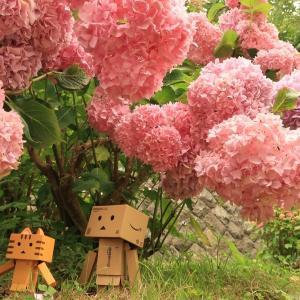 伊達市 夏には紫陽花名所となる有珠善光寺