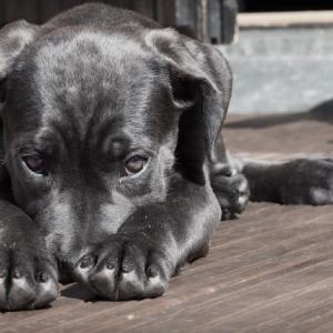 犬を飼う前に考えてほしい「犬の介護」のこと