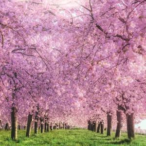 今日の服装計画と花と緑たち
