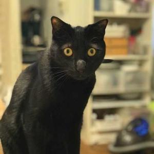 猫となごみ機器 明日から仕事。