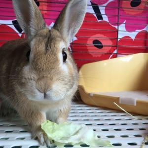 脱力ウサギ・ちゃちゃ丸の『人生なんて暇つぶし!』スタート♪