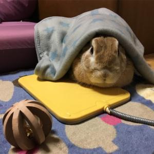 ブルブル…寒い時には家でヌクヌクが幸せだな♪