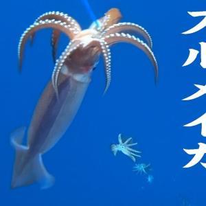 【宿泊旅行情報サイト】[Japan travel site]【石廊崎沖】スルメイカ釣り とび島丸