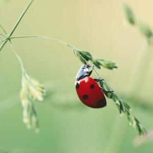 荒川真衣(まいころ)の昆虫食に見る、世界的な昆虫食の広がりについて – ドイツのスーパーにもあるし国連も推奨している
