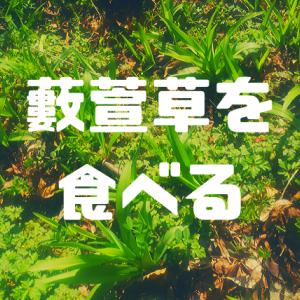 【ヤブカンゾウを食べる】つぼみ・若芽の食べ方、味、季節などまとめ