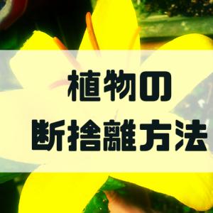 【庭の植物を断捨離】植物を売る方法と捨てる方法まとめ