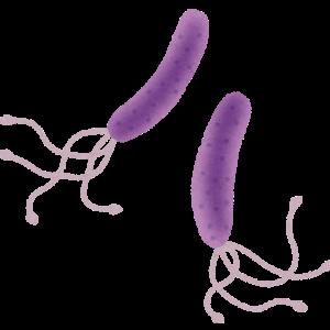 名前だけは可愛い「ピロリ菌」
