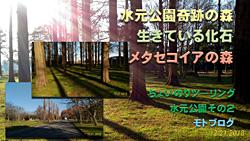 生きている化石「メタセコイアの森」を見に水元公園へ【モトブログ】