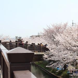伏見桜まつり