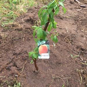 【庭】果樹園計画