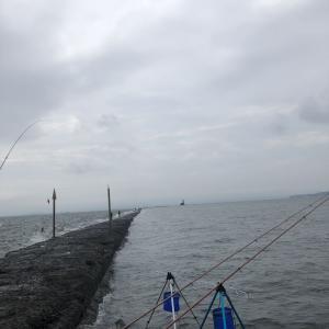 7月9日 野島沖防波堤 青灯・ハナレ
