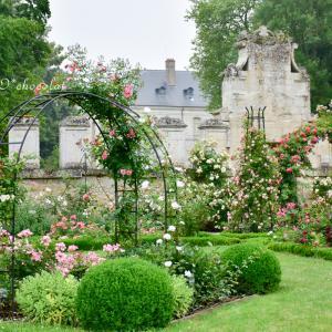 シャアリ修道院の、美しいバラ園