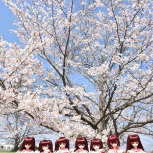 タマ姉の桜を見る会 その弐