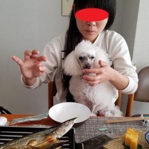 千葉犬連れ旅行~朝食編~