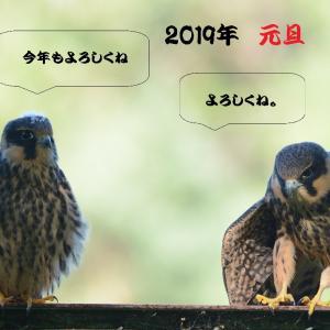 2019年 新年明けましておめでとうございます。
