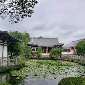 【夏】雨を呼ぶ・睡蓮池に・忘れ草