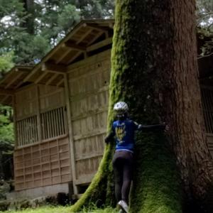 【山梨】小管村の巨木と鶴峠修行ライド