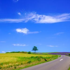 【北海道】北海道の高速道路を乗り降り自由に!北海道観光するなら「北海道観光ふりーぱす」