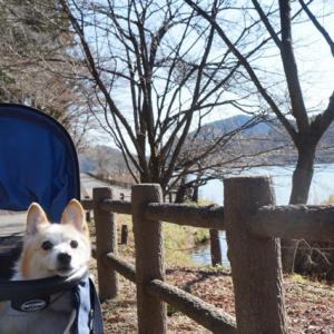 宇都宮市森林公園を歩く
