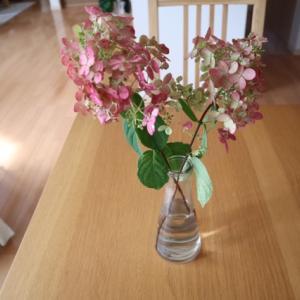 9月の庭の花