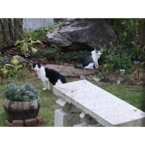 猫ちゃんと冬支度