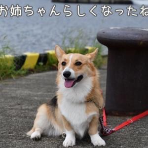 夏休み~NEWドッグラン~