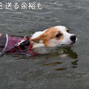 灼熱の西へ~琵琶湖で泳ぐ~