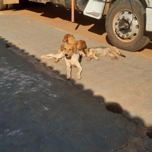 近所が縄張りのギャング犬