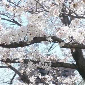 2020☆桜