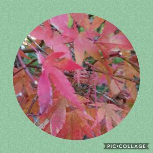 秋の紅葉☆