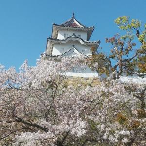 2021.桜☆☆明石城跡の桜