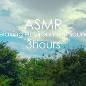 ASMR 睡眠 | 静かに深緑を眺めて目と耳から心も体もリラックスしましょう | 3時間 | environment sound