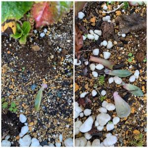 芽と花と…寒がりわんこ
