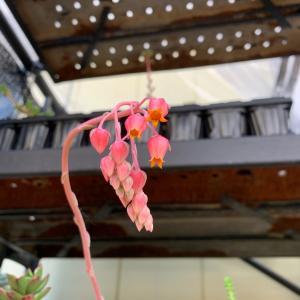 開花…と、手編み再開