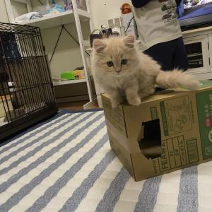 初めて猫を飼います!