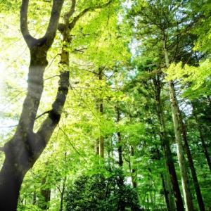 1/fゆらぎと瞑想 キャンドルや自然界の音でストレスを解放