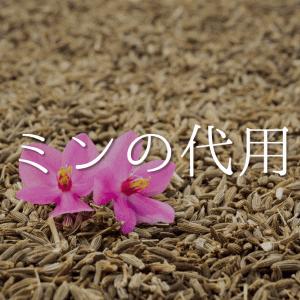 【クミンの代用品 6選】代わりになるものはコレ!!クミンパウダーなどおすすめ代替品を紹介!