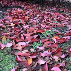 まだまだまばらな紅葉