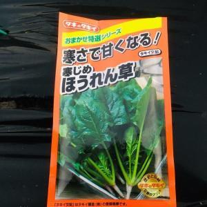 葉物野菜の種撒いたよ!