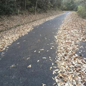 落葉堆肥をつくります!