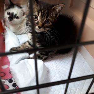 子猫三匹保護