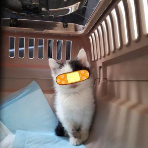カラスに目をつつかれた子猫