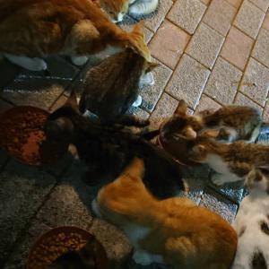 子猫12匹遺棄