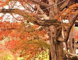 京都の紅葉・いつでも記憶の扉を開けられるように