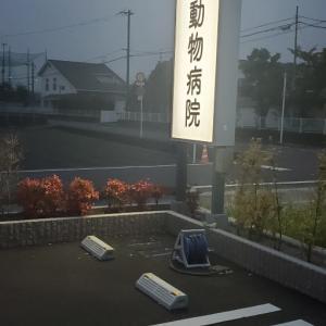 松山の地方蔡と海斗君と颯人君。