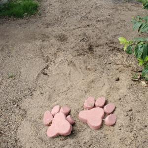 水で固まる砂で防草。とウエスティ。