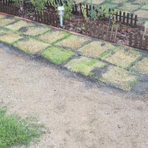 庭造りは思った以上です。とウエスティ。