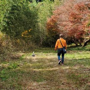 四万十川の源流で紅葉狩りとウエスティ。